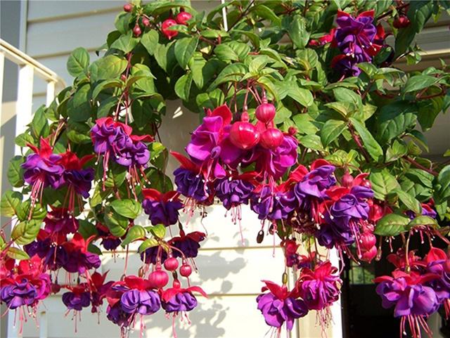 Đảm bảo ánh sáng nhẹ tại nơi trồng hoa